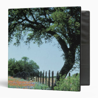 USA, Texas, Texas Hill Country Paintbrush and Binder
