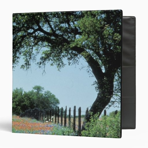 USA, Texas, Texas Hill Country Paintbrush and Vinyl Binders