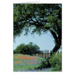 USA, Texas, Texas Hill Country Paintbrush and Greeting Card