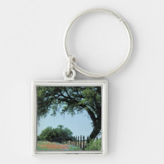 USA, Texas, Texas Hill Country Paintbrush and Keychain