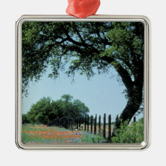 USA, Texas, Texas Hill Country Paintbrush and Metal Ornament