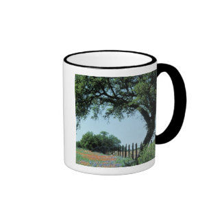 USA, Texas, Texas Hill Country Paintbrush and Coffee Mugs