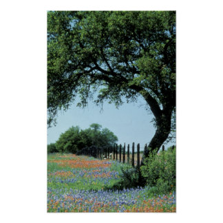 USA, Texas, Texas Hill Country Paintbrush and Poster