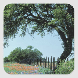 USA, Texas, Texas Hill Country Paintbrush and Stickers