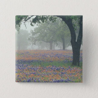 USA, Texas. Texas paintbrush and bluebonnets Button