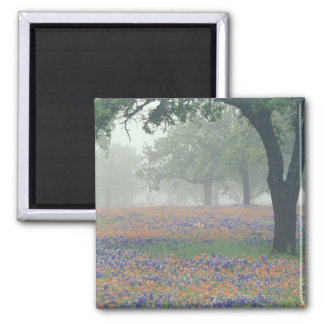 USA, Texas. Texas paintbrush and bluebonnets Magnet