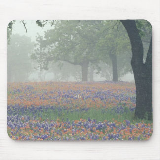 USA, Texas. Texas paintbrush and bluebonnets Mouse Pad