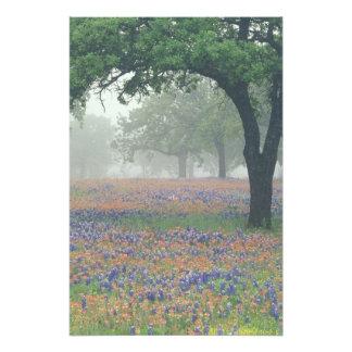 USA, Texas. Texas paintbrush and bluebonnets Photo Print