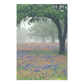 USA, Texas. Texas paintbrush and bluebonnets Photo Print