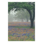 USA, Texas. Texas paintbrush and bluebonnets Poster