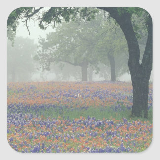 USA, Texas. Texas paintbrush and bluebonnets Square Sticker