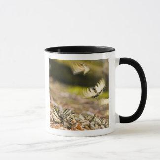 USA, TN, Tellico. Swallowtail butterflies Mug