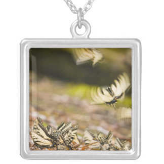USA, TN, Tellico. Swallowtail butterflies Silver Plated Necklace