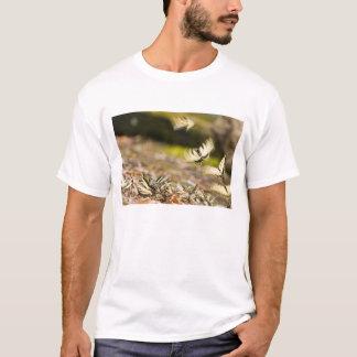 USA, TN, Tellico. Swallowtail butterflies T-Shirt
