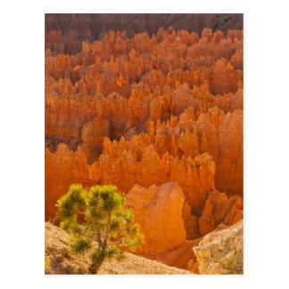 USA, Utah, Bryce Canyon National Park Postcard