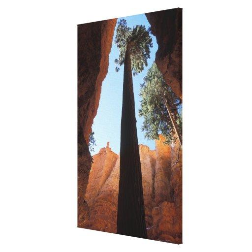 USA, Utah, Bryce Canyon National Park. Tall Canvas Print