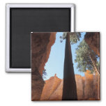 USA, Utah, Bryce Canyon National Park. Tall Magnet