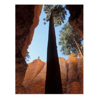 USA, Utah, Bryce Canyon National Park. Tall Postcard
