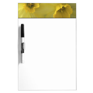 USA, Utah, Cache Valley Daffodils Dry-Erase Boards