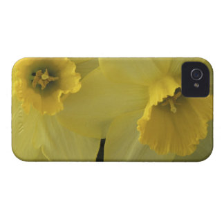 USA, Utah, Cache Valley Daffodils iPhone 4 Case