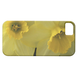 USA, Utah, Cache Valley Daffodils iPhone SE/5/5s Case