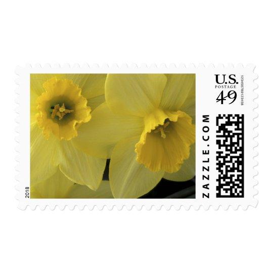 USA, Utah, Cache Valley Daffodils Postage