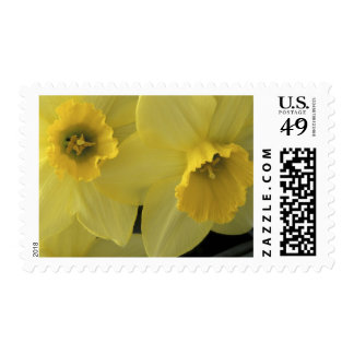 USA, Utah, Cache Valley Daffodils Postage Stamp