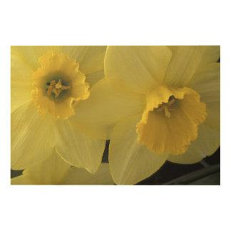 USA, Utah, Cache Valley Daffodils Wood Print