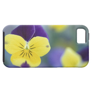 USA, Utah, Cache Valley Detail of a Johnny Jump iPhone SE/5/5s Case
