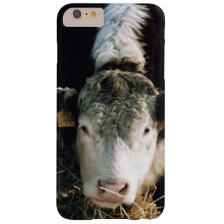 USA, Utah, Cache Valley, Hereford Steers Barely There iPhone 6 Plus Case