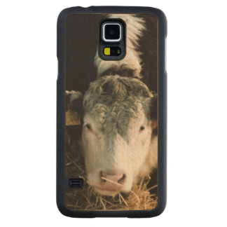 USA, Utah, Cache Valley, Hereford Steers Carved Maple Galaxy S5 Case