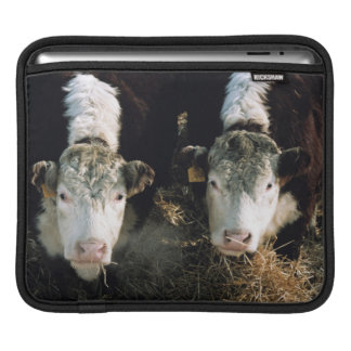 USA, Utah, Cache Valley, Hereford Steers Sleeve For iPads