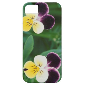 USA, Utah, Cache Valley, Johnny Jump Up iPhone SE/5/5s Case