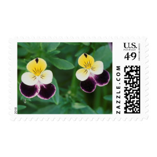 USA, Utah, Cache Valley, Johnny Jump Up Postage