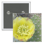 USA, Utah, Canyonlands, NP, Desert Prickly Pear 2 Inch Square Button