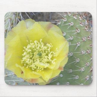 USA, Utah, Canyonlands, NP, Desert Prickly Pear Mouse Pad