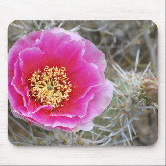 USA, Utah, Canyonlands NP, Desert Prickly Pear Mouse Pad