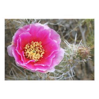 USA, Utah, Canyonlands NP, Desert Prickly Pear Photo Print