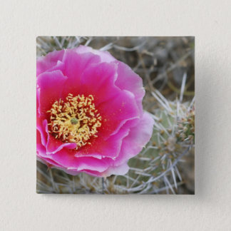 USA, Utah, Canyonlands NP, Desert Prickly Pear Pinback Button