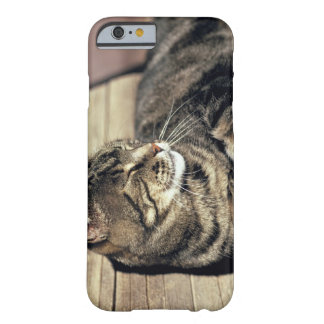 USA, Utah, Capitol Reef NP. Sleeping tabby cat Barely There iPhone 6 Case