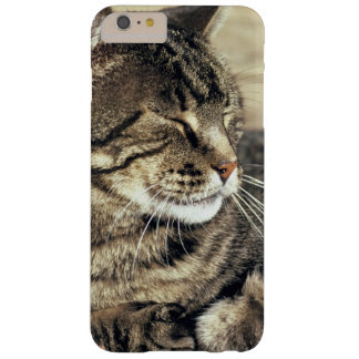 USA, Utah, Capitol Reef NP. Sleeping tabby cat Barely There iPhone 6 Plus Case