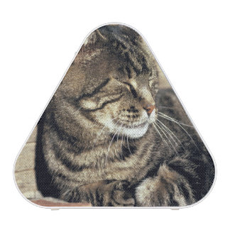USA, Utah, Capitol Reef NP. Sleeping tabby cat Bluetooth Speaker