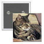 USA, Utah, Capitol Reef NP. Sleeping tabby cat 2 Inch Square Button