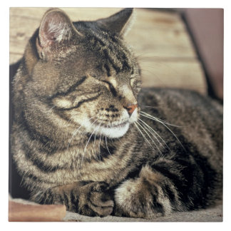 USA, Utah, Capitol Reef NP. Sleeping tabby cat Ceramic Tile