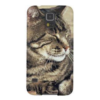 USA, Utah, Capitol Reef NP. Sleeping tabby cat Galaxy S5 Case
