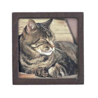 USA, Utah, Capitol Reef NP. Sleeping tabby cat Gift Box