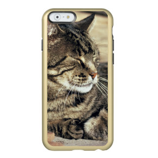 USA, Utah, Capitol Reef NP. Sleeping tabby cat Incipio Feather Shine iPhone 6 Case