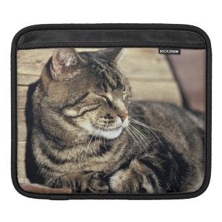 USA, Utah, Capitol Reef NP. Sleeping tabby cat Sleeves For iPads