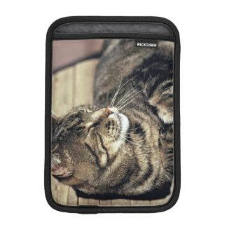 USA, Utah, Capitol Reef NP. Sleeping tabby cat iPad Mini Sleeves
