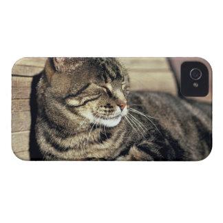 USA, Utah, Capitol Reef NP. Sleeping tabby cat iPhone 4 Case